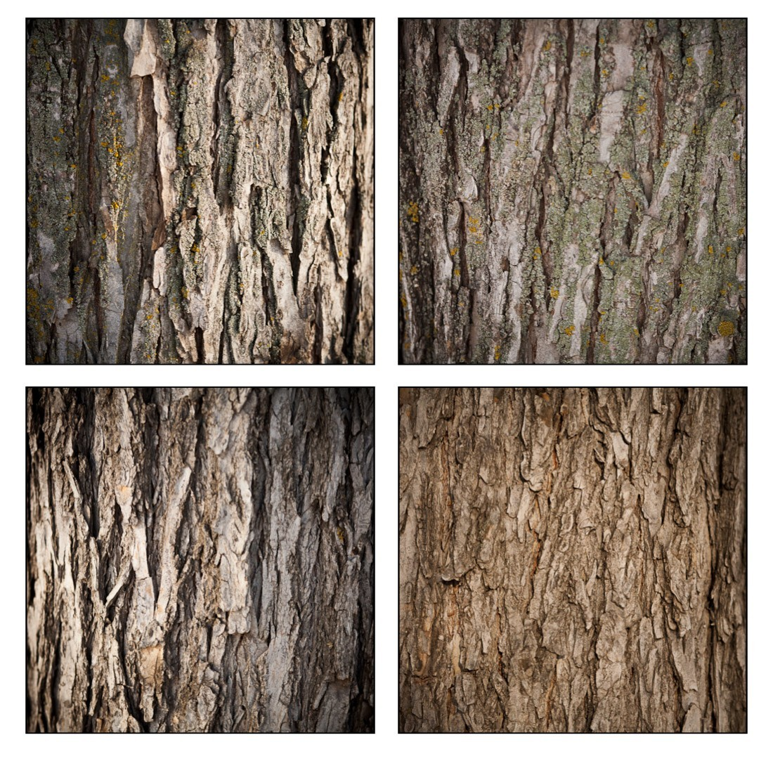 Image to start with you will need a relatively big wood texture - Which Of The Two Photos Above Have The Most Texture
