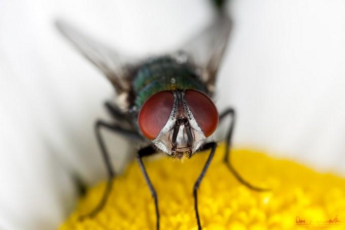 macro photo of fly