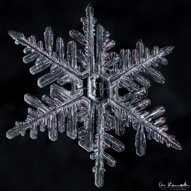 macro-photo-of-snowflake-featured
