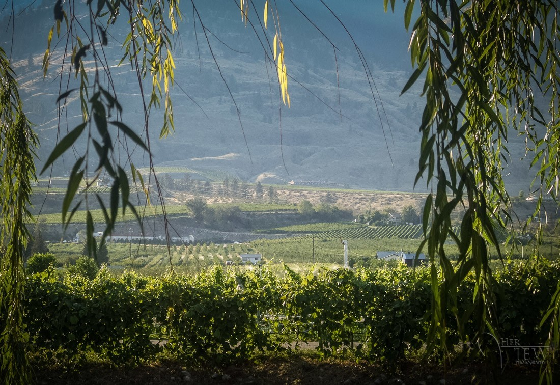 wine-photography-tours-0004