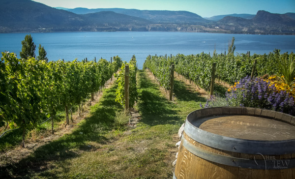 wine-photography-tours-0001