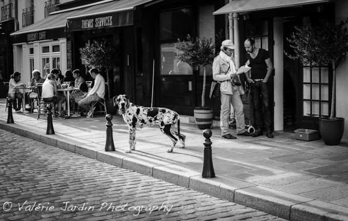 Paris street photography two men and a big dog