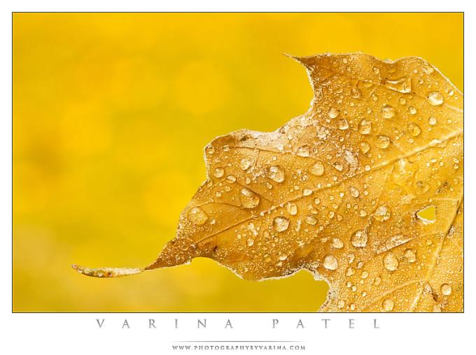 Varina_Patel-012