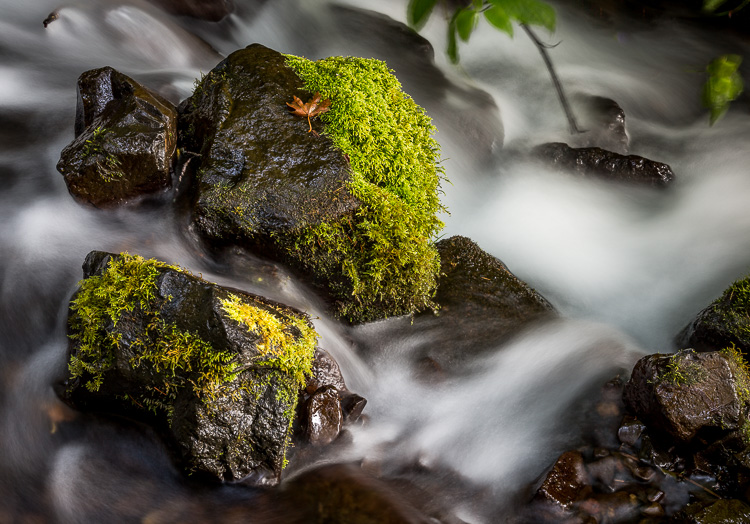 photo of a moving stream and waterfall in Oregon outside Portland