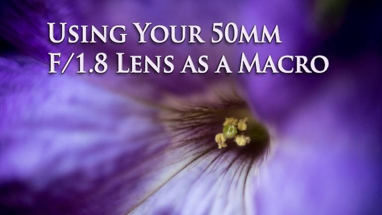 using your 50mm lens as a macro