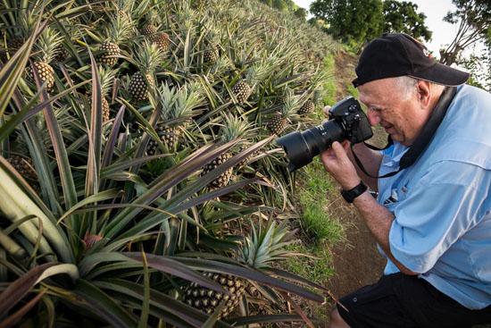 pineapple farm tour