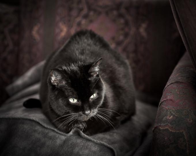 black cat looking black, not gray