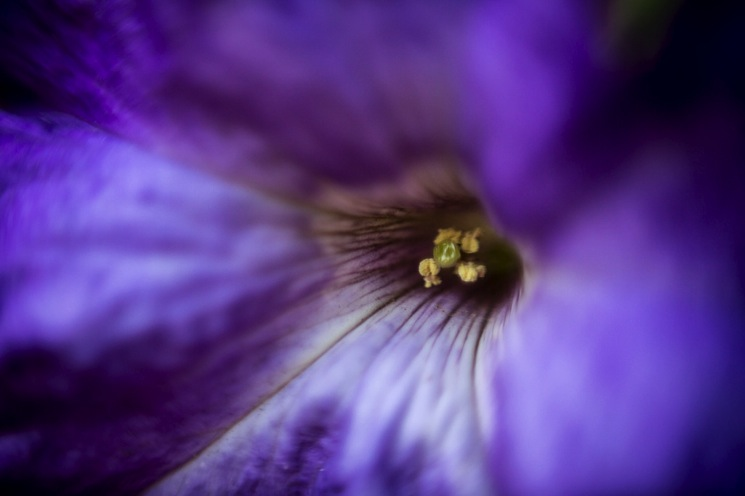 A photograph of a flower using a reversal ring on a 50mm lens