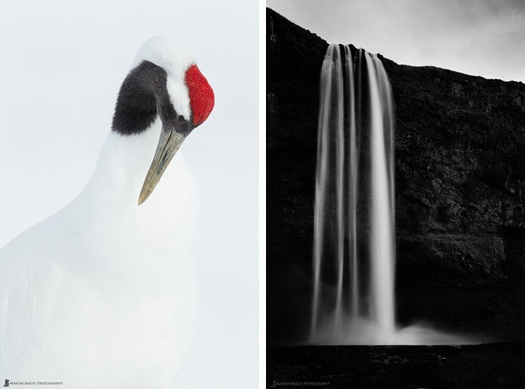 bird at Hokkaido Akan and Iceland water fall by Martin Bailey