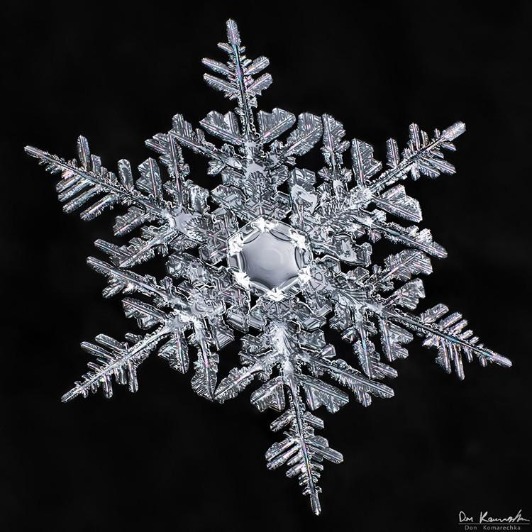 snowflake-don-komarechka