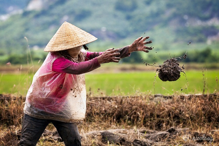 vietnam-worker-in-field-nicole-young