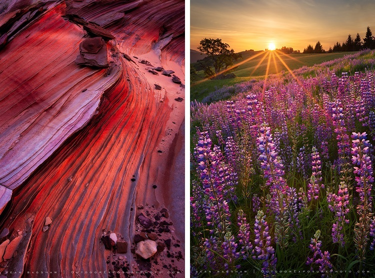 two photographys of nature scenes including a sunrise over field of lupines