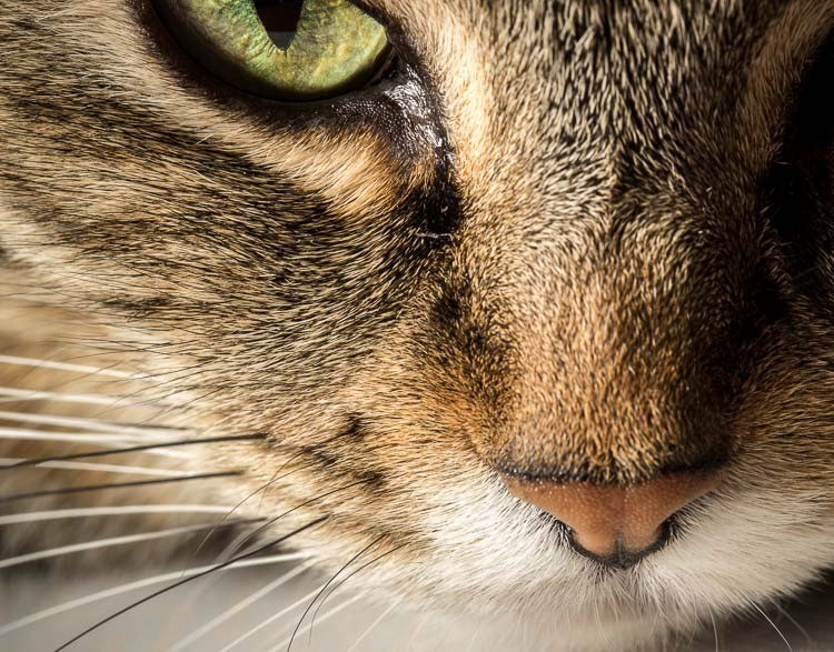close up shot of a cat's face