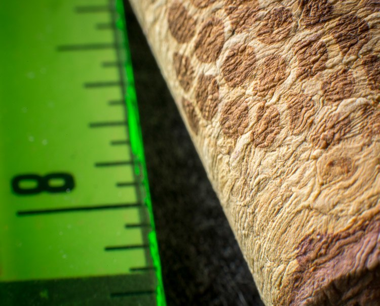 Macro photography extension tubes 750px 17
