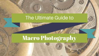 ultimate guide to macro photography