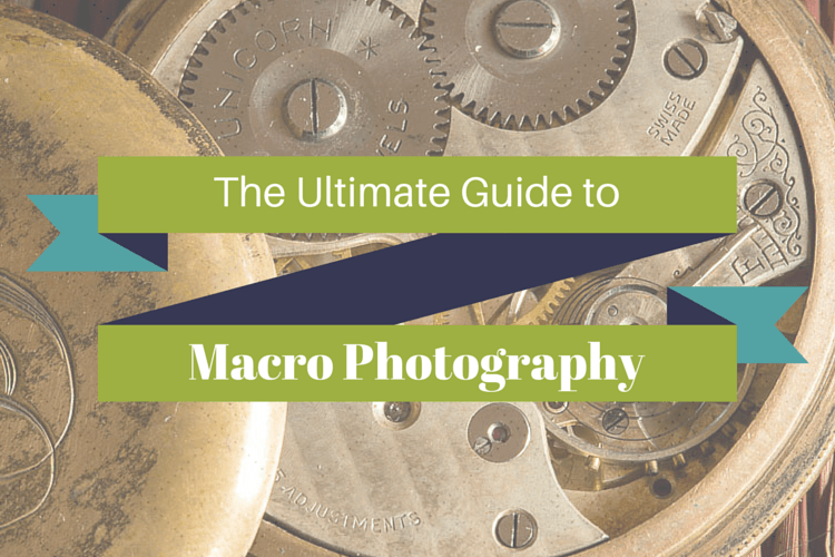 The Ultimate Guide Macro Photography
