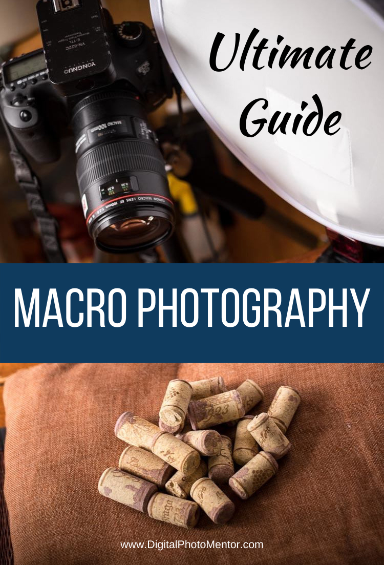 The ultimate macro photography guide to help beginners learn how to take photos of small things. Tips for camera settings and setup for macro photography.  Learn how to get sharp images and best lighting techniques for macro photography.