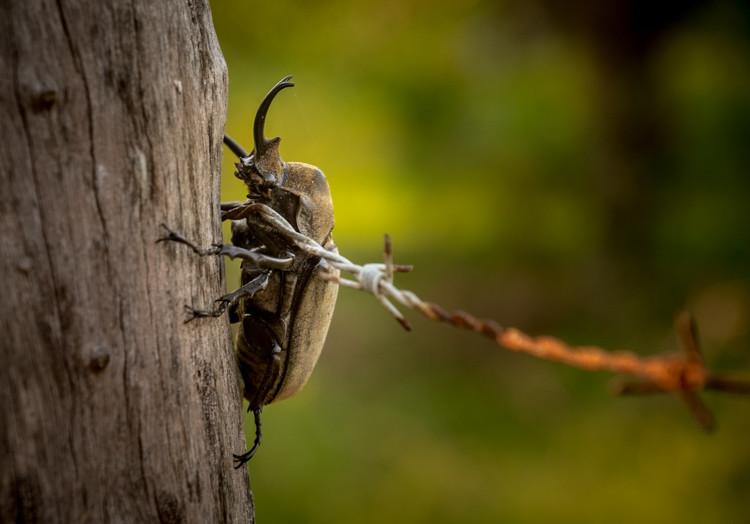 scarab bettle closeup with Fuji X-T1 mirrorless camera