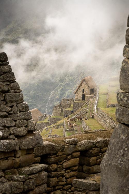 New inhabitants (llamas) at Machu Picchu.