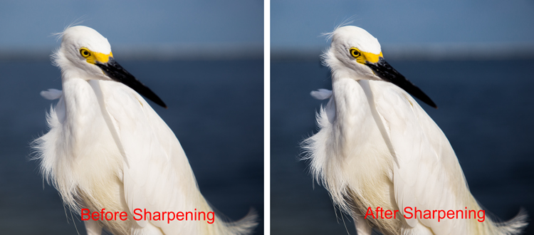 Before and after sharpening picture of a bird