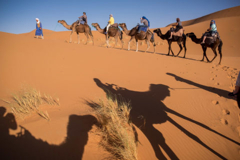 Tour group participants riding camels in the sahara
