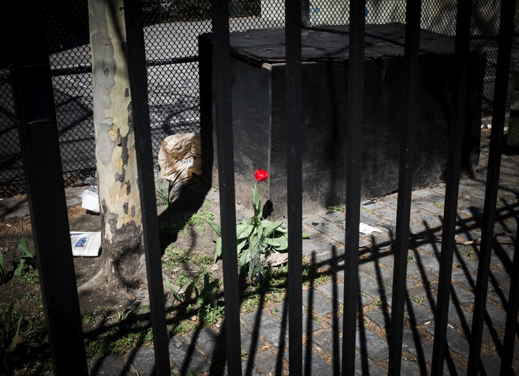 A single rose grows in a sidewalk crack in the East Village