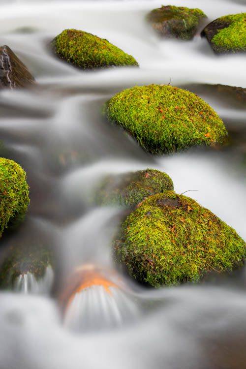 mossy rocks photographed in a creek