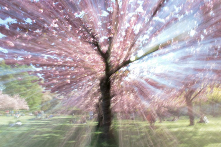 How to do a Zoom Burst Special Effect with Your Camera