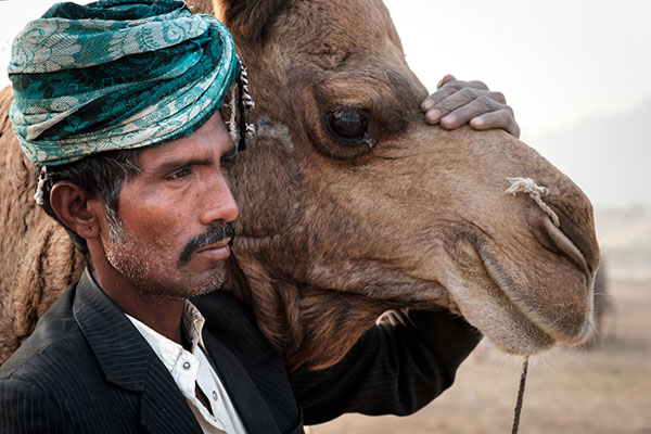 Portrait of herder and camel in the Pushkar Camel Fair grounds.
