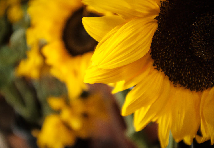 example photo of a sunflower at the farmers market to show low light capabilities of the Fuji X100F mirrorless camera