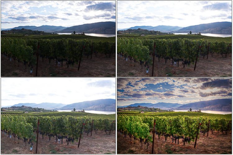 3 photos shot hand-held and bracketed a 2 stops apart combine to create a magnificent HDR photo of the okanagan valley and grape vines