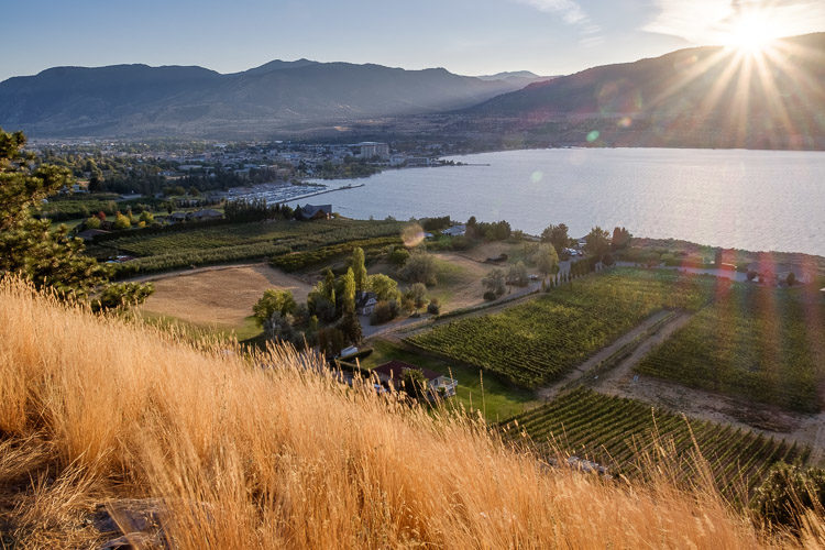 stunning HDR photo of the Okanagan lake with vineyards in the foreground and mountains in the distance