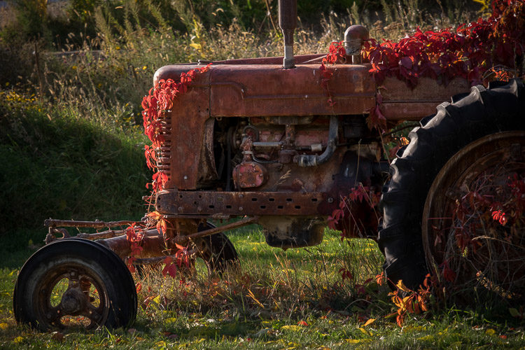 Photo of old tractor covered in vines processed normally to look great