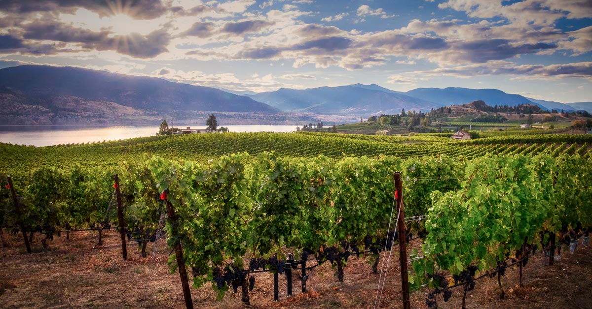 An amazing vista view of a winery in the Okanagan valley wine region of Canada's British Columbia.