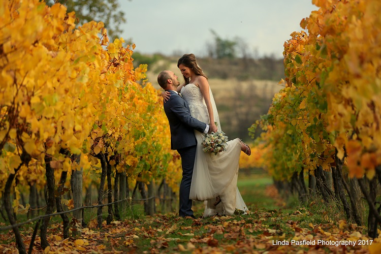 bride and groom photographed among the vineyard vines showing fall colors