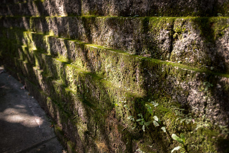 nice light on the moss covered wall along the sidewalk