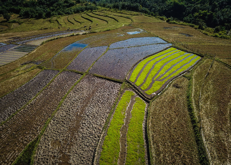 rice paddies around Kyaing Tong in Myanmar