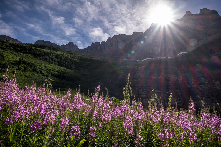 Sun flare and purple flowers and spring photography
