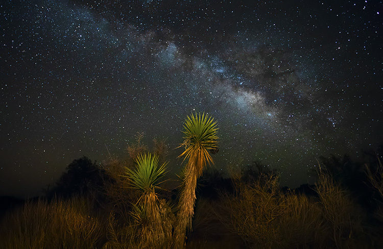 cactus painted with light while exposing the milky way behind