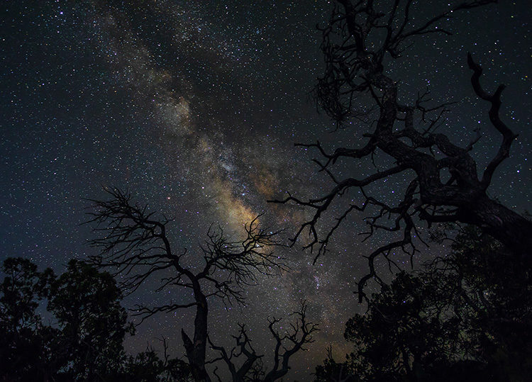 milky way shot through trees in the foreground
