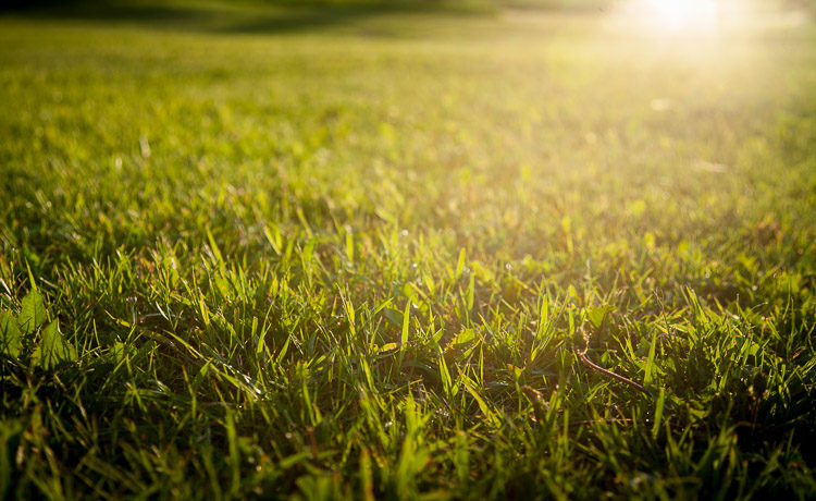 grass in the sun - photography challenge