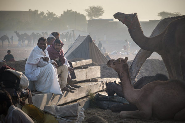 Men sitting with camels around and camels in the distance at the pushkar camel fair
