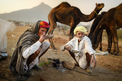 two indian men and camels at the Pushkar camel fair