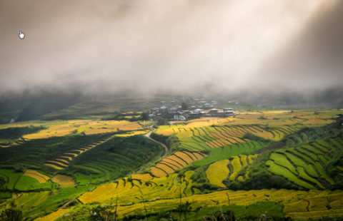 terraced rice fields show their green colors while being covered in clouds