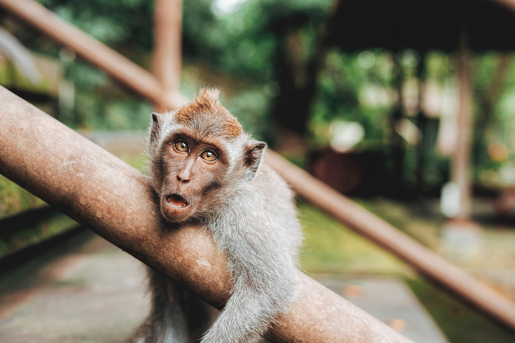 monkey looking exhausted like a photographer trying to figure out what camera modes to shoot in
