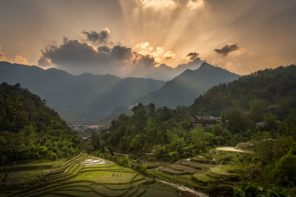 rice paddies in Vietnam as sunset