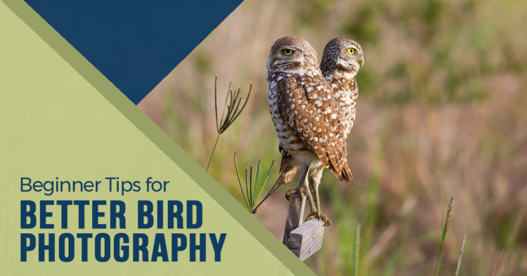 8 Beginner Tips for Better Bird Photography