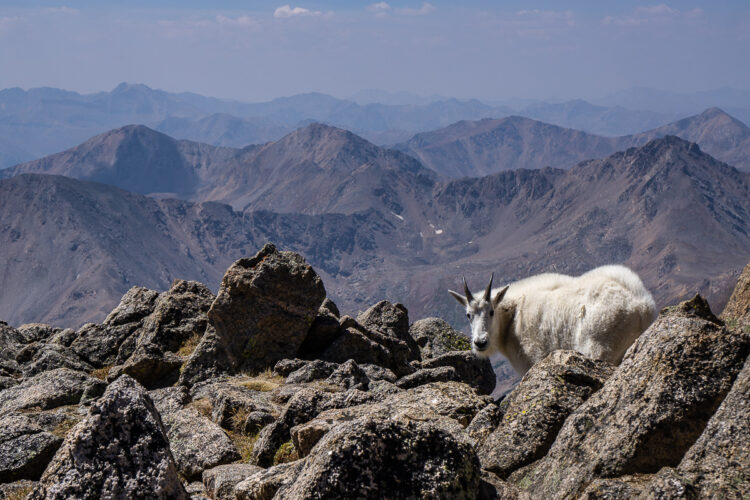 mountain goat on the rocks with sweeping mountain ranges in the distance behind