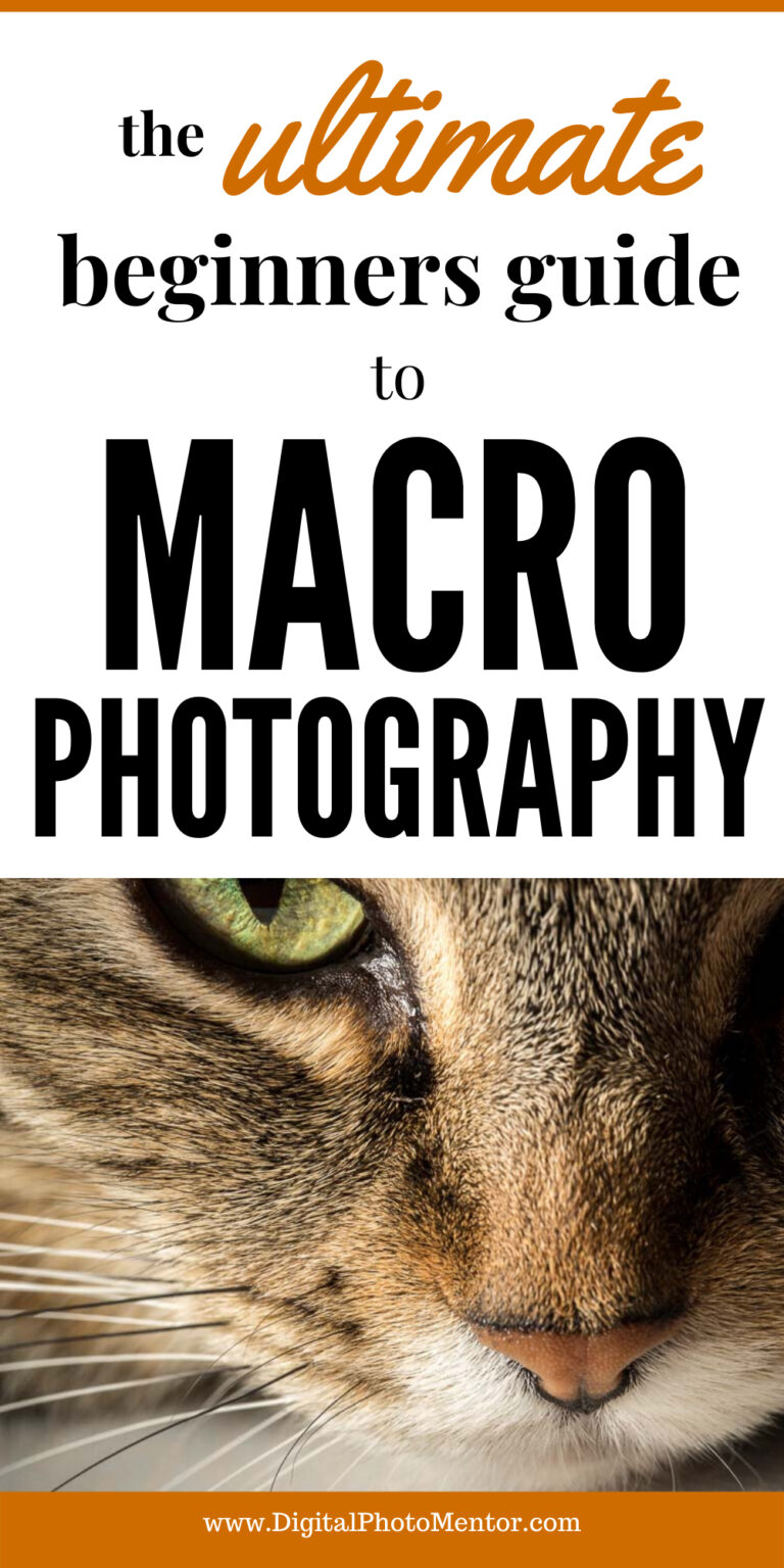 ultimate guide to macro photography for beginners