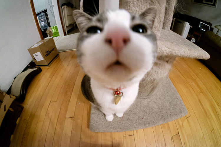 close up of a cat's nose with the rokinon super wide-angle lens